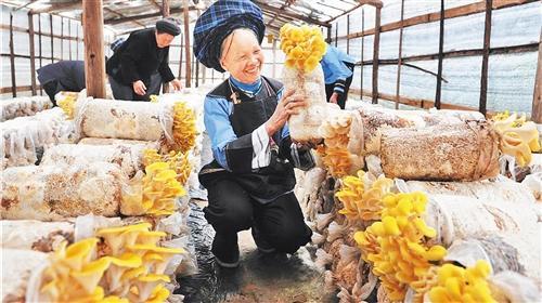 种植药材赚钱吗:贵州:来一场深刻的农村经济产业革命