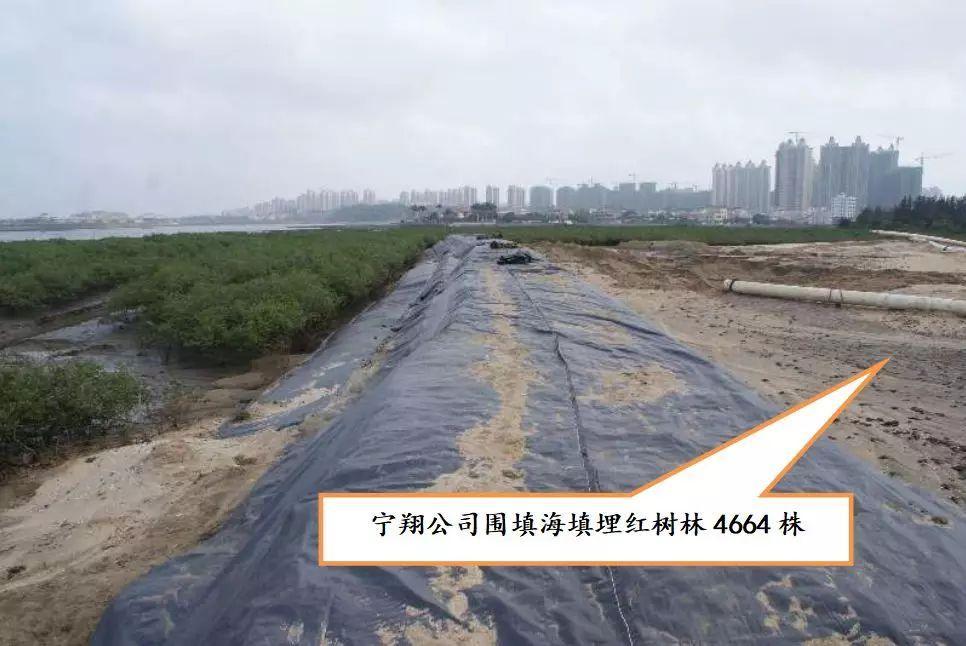生态环境部:海南澄迈县肆意围填海、破坏红树林