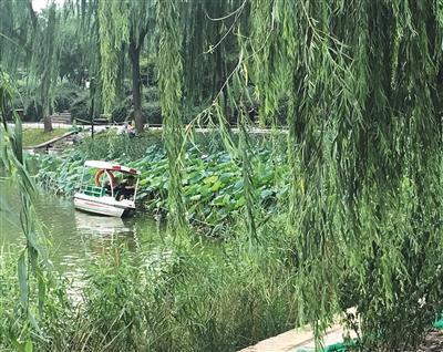 """北京:""""不文明游园行为黑名单""""发布多日 仍存不听劝导者"""