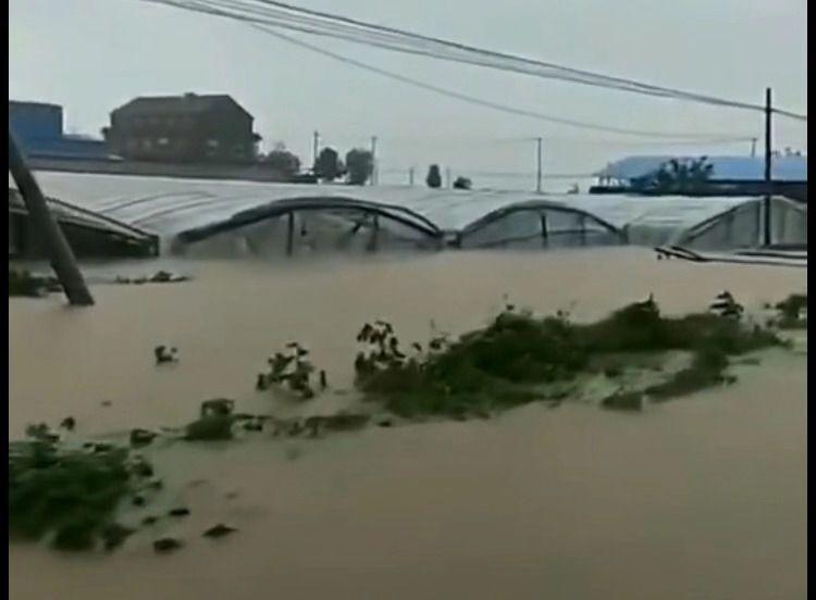 山东昌乐因台风蔬菜大棚受淹 村民坐挖掘机撤离