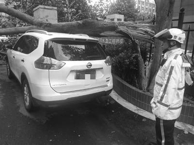 大树被台mainhong高端 网站风刮断,砸坏车辆