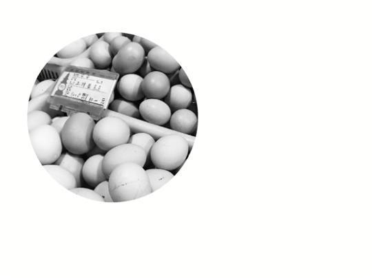 收购价一个半月涨46%鸡蛋涨势下月初才会回落