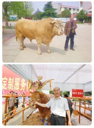 """""""牛人""""祁兴磊:培育中国自主知识产权第一牛"""