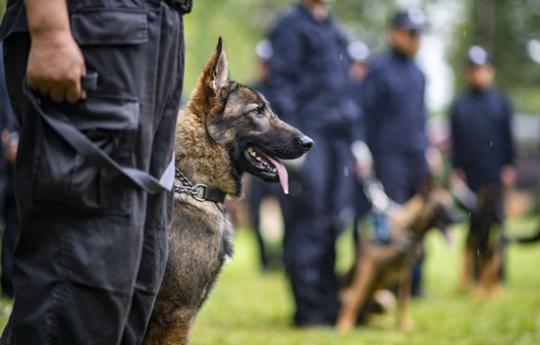 """中国首只警用工作克隆犬""""昆勋""""入警"""