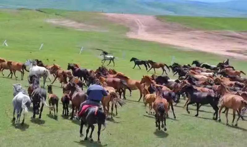 总书记看过dixo点pw的这匹马,很牛!