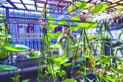 """北京朝阳高碑店家家有个""""半亩园"""""""