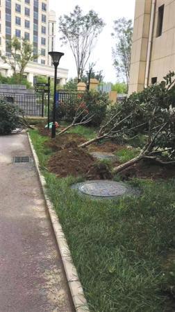 <b>北京昌平一小区楼体凿洞开窗 绿地损毁16棵树被拔</b>