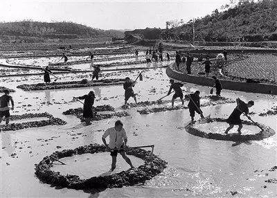 中国如何以不到世界9%的耕地 养育了世界近五分