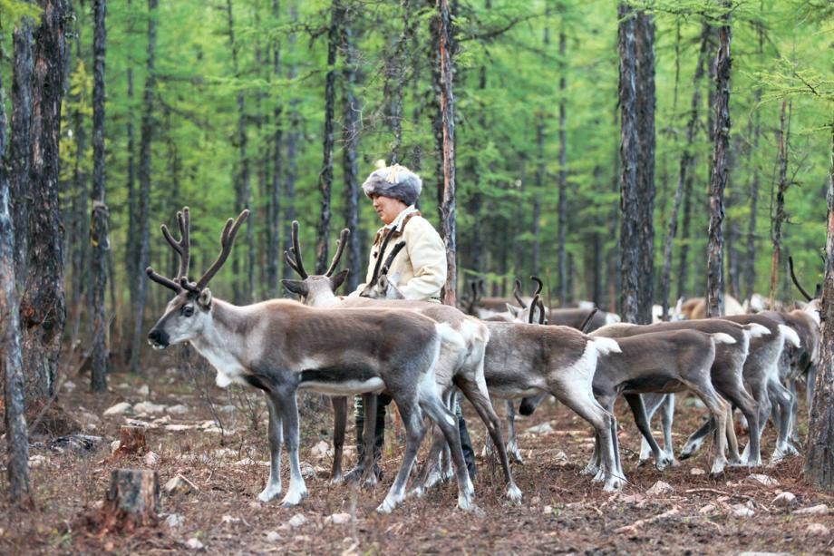 王伟:中国最后的驯鹿部落——敖鲁古雅