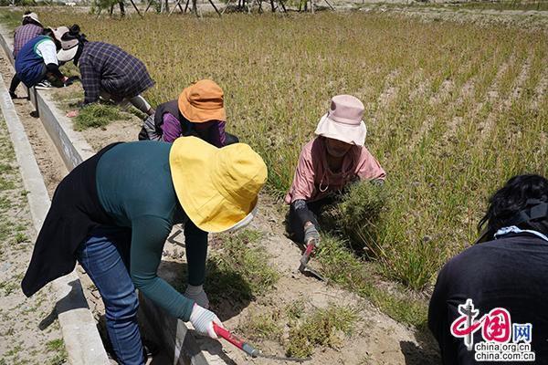 """风沙少了、腰包鼓了 儋州365新闻西藏扎囊县打出""""生态+扶贫""""组合牌"""