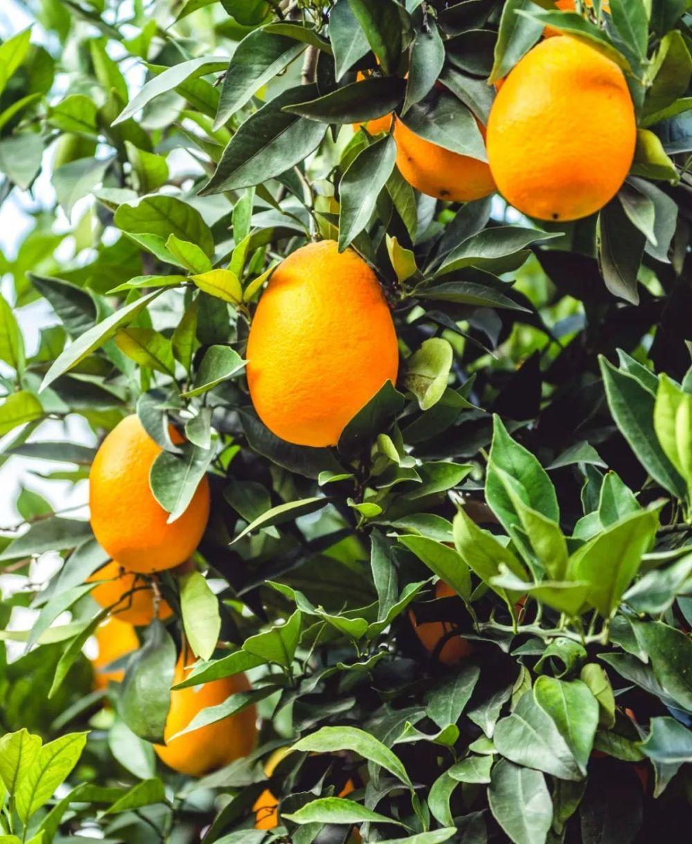 如何种出14亿人份的水果?