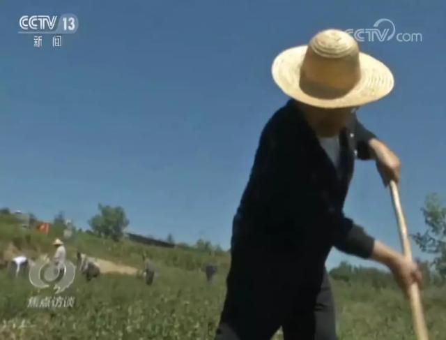 """以前几乎没到过农村的他成了村里的""""玉米书记"""""""