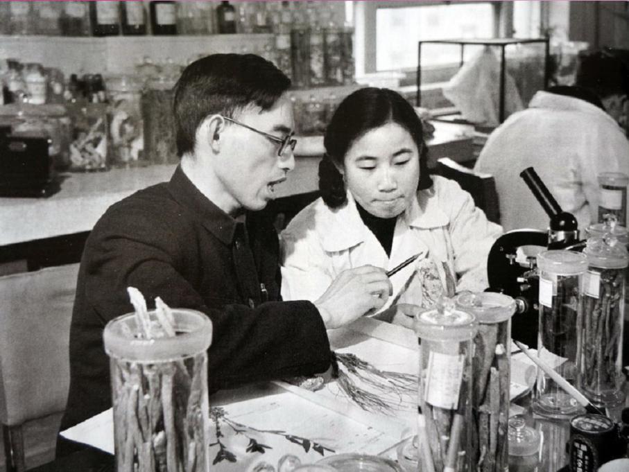 在中医研讨院中药研讨所任研讨实习员的屠呦呦与教师楼之岑副教授一同研讨中药