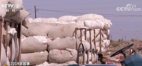 2019年我国棉花的总产量预计将达616万吨 同比上升0.9%