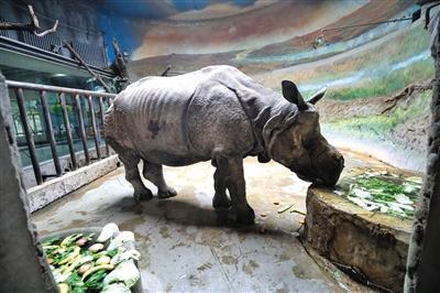 北京动物园老年动物享受加餐、清洁牙齿等特殊待遇