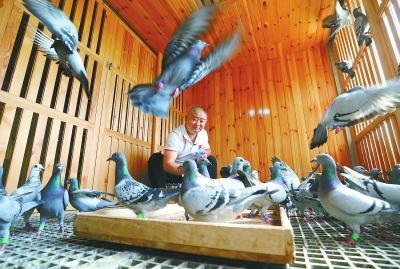 带着我的鸽子上天安门广场