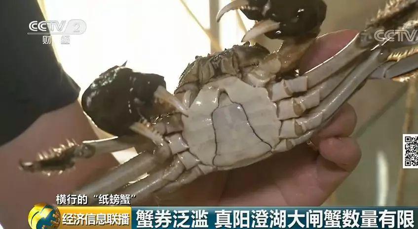"""""""纸螃蟹""""背后套路:手里没有一只蟹 经销商却赚翻了"""