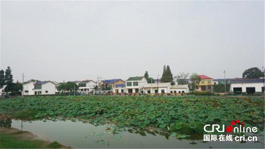 长沙盘龙岭:荷绿虾肥 水清景美
