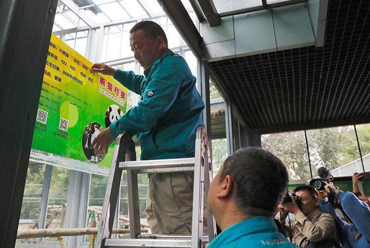 双胞胎大熊猫亮相 北京动物园熊