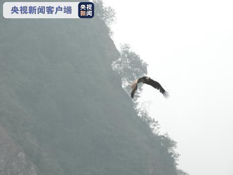 云南大理南涧首次记录到国家一级重点保护鸟类黑鹳