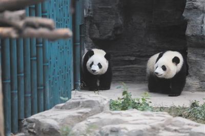 """""""萌宝""""""""萌玉""""亮相北京动物园"""