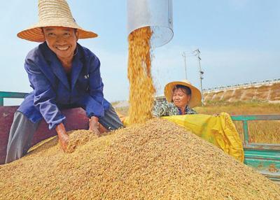 中国粮食总产量2015年以来稳定在6.5亿吨以上