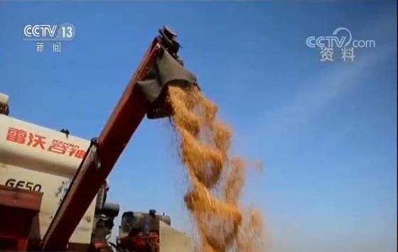 新闻头条|《中国的粮食宁静》白皮书揭晓 两个主要指标双双凌驾6.5亿吨,美女穿比基尼