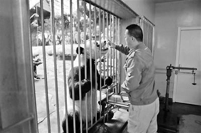 大熊猫白内障实现早期诊断
