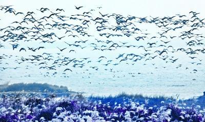 武汉用心保护湿地 让珍稀候鸟定居武汉