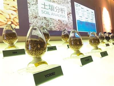 """""""一带一路""""上的中国农业新名片:海水稻香飘海外"""