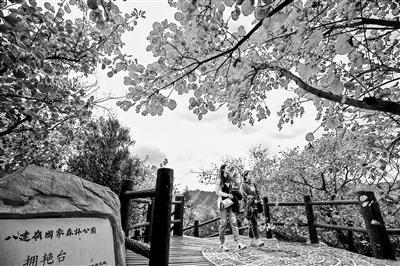 """北京秋日""""赏叶""""地图:赏缤纷彩叶 去这16处公园景区"""