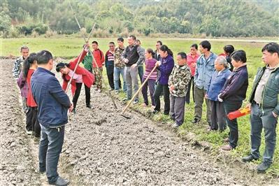 东莞在韶关等地建立427个农业特色产业项目 助当地脱贫