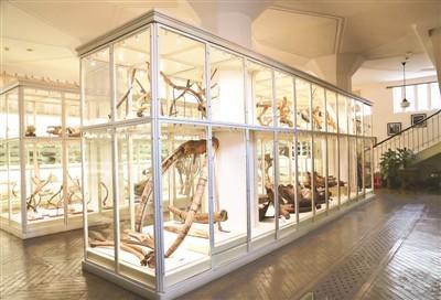天津自然博物馆:见证百年前科考传奇