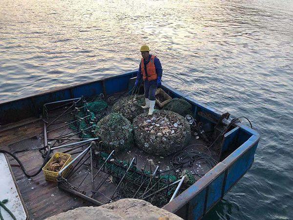 """獐子岛渔港现大量死亡扇贝 船员叹""""太可惜了"""""""