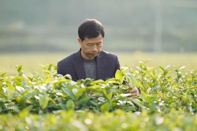科技特派员王衍成:二十八年坚守,只为茶花满山开