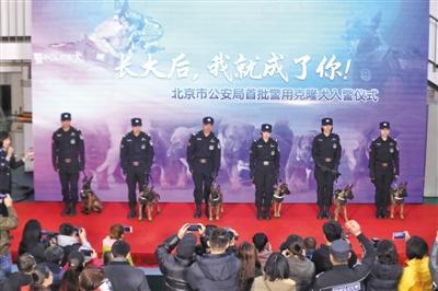北京首批6头克隆警犬正式入警 供体均是功勋警犬