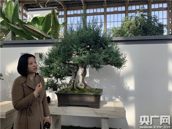 """江苏如皋:小盆景孕育致富""""摇钱树"""""""