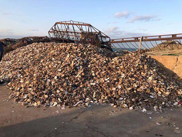 獐子岛员工称采捕方法破坏海底生态:扇贝或被呛死