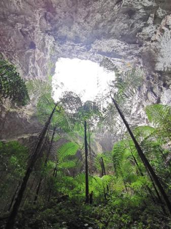 广西那坡县发现一世界级天坑群