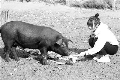 """女大学生当""""猪倌"""" 想带村民脱贫"""