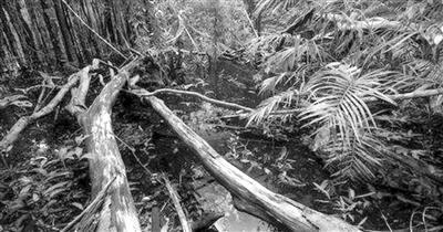 """亚马孙雨林缩减临界点迫近 地球或将进入""""紧急状态"""""""