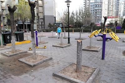 小区公共区域树木遭腰斩 居委会:对存隐患枯木正常处理