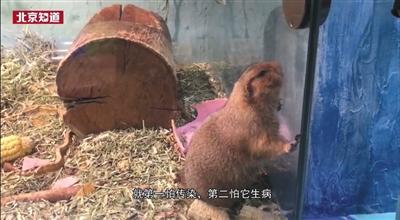 多家商场内设动物园卫生条件堪忧 监管部门已派人检查