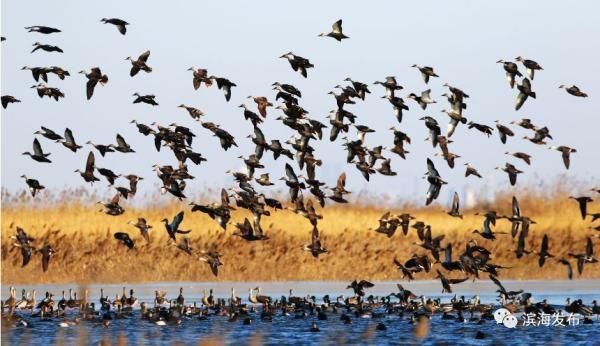 【生态文明@湿地】天津这里要申报世界自然遗产啦
