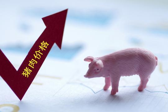 豬肉保供穩價成效如何?跟隨記者深入調研生豬養殖現