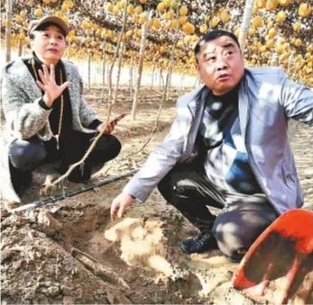 中医理疗师转行当新型农民 流转1000亩地种瓜不为瓜