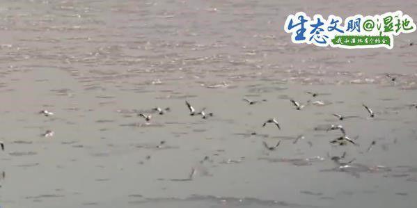 群鸟拉开冬日流动画卷