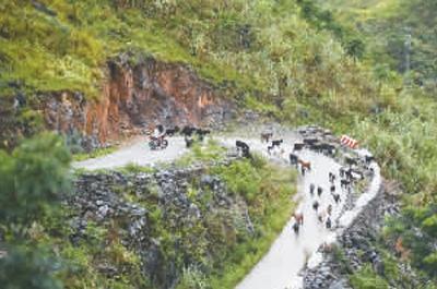 当地农民在放养山羊。本报记者庞革平摄