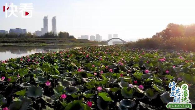 """""""塞上江南"""" 明珠璀璨——我和宁夏有个约会"""