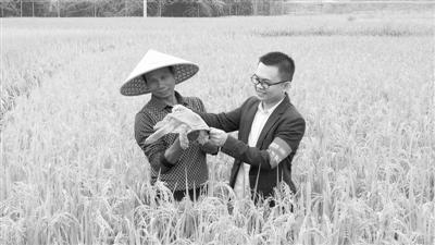 "bck体育种绿色稻、养黄沙鳖 广西玉林稻田种出新""门道"""